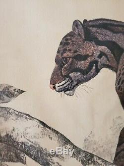 Clouded Leopard Rama Samaraweera Framed Print Gorgeous 30 High x 20 Wide